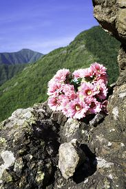 stock photo of apennines  - Small bouquet of flowers - JPG