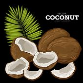 Постер, плакат: Coconut Isolated Vector