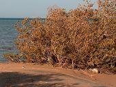 Mangrove By The Sea