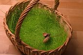 Basket, Artificial Grass And Acorn