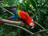 Macaw07_Filt