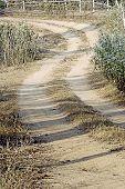 Dusty Lane
