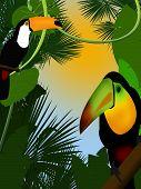 Zwei tukans