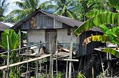 picture of longhouse  - Traditional village originally used by Borneo headhunters - JPG