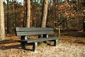 Bench In Forrest.