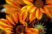 Coober Pedy Flowers