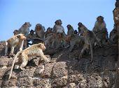 Monkey Standoff