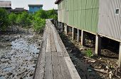 wooden walk way in the swamp village