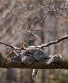 Squirrels in Love