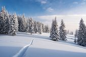 Winter forest in snow. Mountain landscape with a footpath. Sunny day and frosty weather poster
