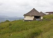 Thatched broken house in Transkei South Africa poultry