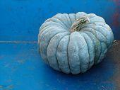 Blue Gray Pumpkin