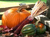Pumpkins, Squash And Corn