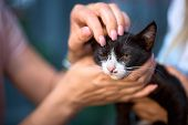 Homeless Animals. Thrown Cat On The Hand, Looking At The Camera. Animal Welfare In A Homeless Shelte poster
