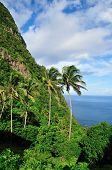 Palm Trees And Piton