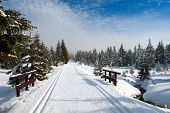 wintry landscape scenery with modified cross country skiing way