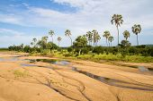 Ruaha Riverbed