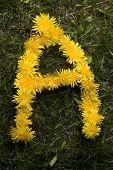 Letter A In Dandelions