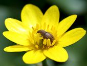 Insect Sitting In Yellow Flower