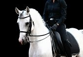 Rider On White Arab