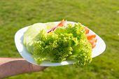 Fresh Salad Made From Homegrown Organic Vegetables. Vegetarian Food Concept. Fresh Food. Taste Of Fr poster