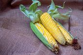 Organic And Fresh Yellow Sweet Corn Is A Type Of Sweet Corn Is Placed On The Sack Cloth.the Taste Is poster