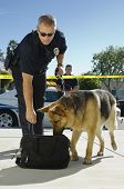 Police officer examining a bag with trained dog