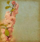 alt Papier Textur mit einem Zweig von schönen rosa Blüten. Amygdalus Triloba.