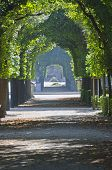 picture of schoenbrunn  - Green tree alley  - JPG