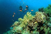 Coral Reef, Tropical Fish and couple of people scuba diving
