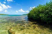 Manglares del caribeños