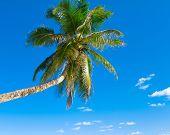 Tree Scene Sea