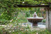 Jardín inglés después de la lluvia