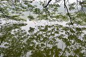 Hoan Kiem Lake, Hanoi, Vietnam From Underneath A Tree
