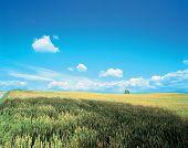 Plains Crops poster