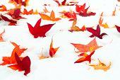 Fallen Sweetgum Leaves In The Snow