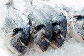 Mariscos, pescados - mariscos frescos dorada en hielo, comida sana