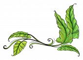 Illustration of green long leaves on a white background