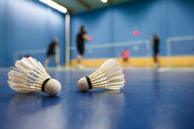 picture of game-cock  - badminton  - JPG