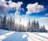 Fantastic winter landscape. Dramatic overcast sky. Carpathian, Ukraine, Europe. Beauty world.
