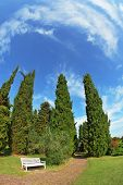 Romantic Landscape Park -  garden in Italy. White wooden bench at the edge of cypress groves. Photo taken fisheye lens