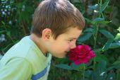 Boy Smelling Rose