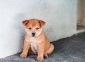 a cute chubby little puppy