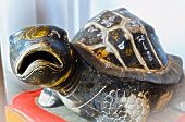 Rock Turtle With Mystic Symbol With Believing Of Long Life