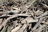 Many old waste wood