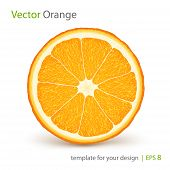 Vector fresh ripe orange