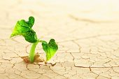stock photo of germination  - Plant sprouting in the desert - JPG