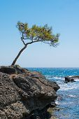 stock photo of windswept  - Lone windswept tree at edge of coast seen in southern Turkey - JPG