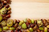 stock photo of cobnuts  - Green and brown two - JPG