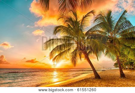 Beautiful sunset over the sea with a view at palms on the white beach on a Caribbean island of Barba poster